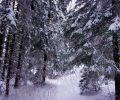 Tél a Bükkben a Túraterápiával